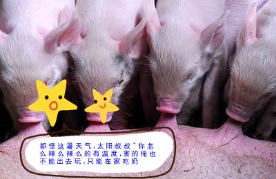乳猪教保料